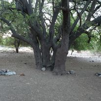 העץ במעיין חבקוק